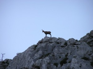 parc national sjeverni Velebit 3