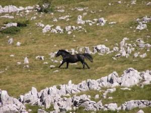 parc national sjeverni velebit croatie