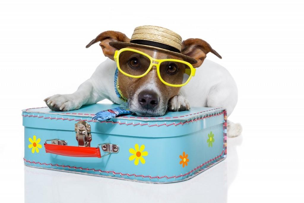 chien-en-vacances